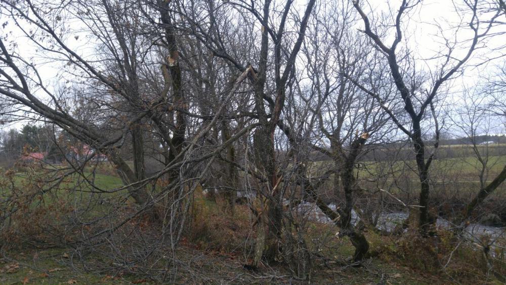 arbre3.thumb.jpg.2dc12282616fe312cf3bafacb76b1e18.jpg